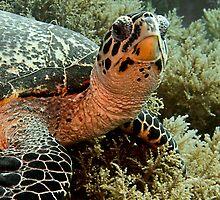 Turtle by Marcel Botman