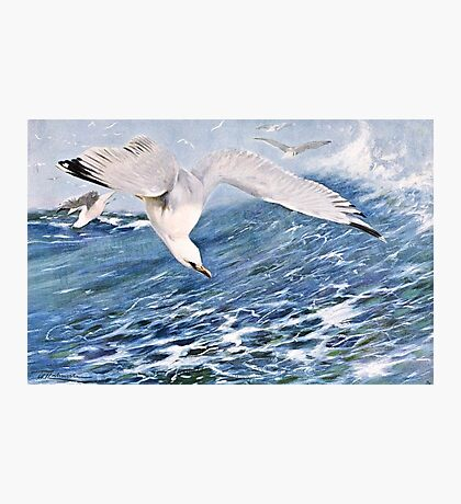 Sea Gull Over the Ocean Painting Photographic Print