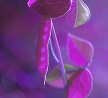 Purple Pea Pod by Smurfesque