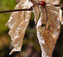 Lady-bird by Denitsa Dabizheva