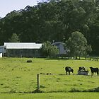 Farmyard - Bundanon by tmac