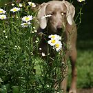 Daisy Dog by TingyWende