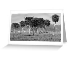 Arcadia Morning BW Greeting Card
