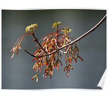 New Maple Leaves Poster