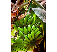 Fresh Bananas Photographic Print