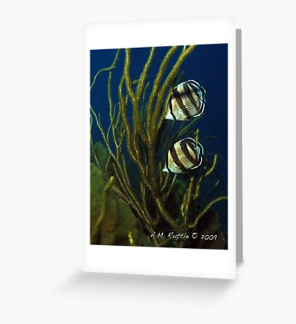 Banded Duo Greeting Card