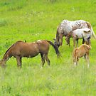Mothers and Babies by Tracy Faught