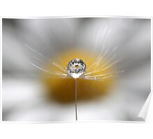 A drop full of daisies Poster