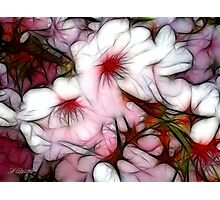 Pink Rhapsody Photographic Print