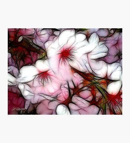Pink Rhapsody Photographic Print