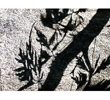 Ethereal Engraving Photographic Print
