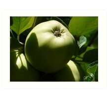 green apples on the tree Art Print