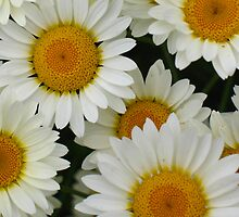 Happy Daisy  © by JUSTART