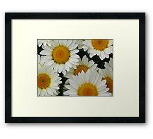 Happy Daisy  © Framed Print