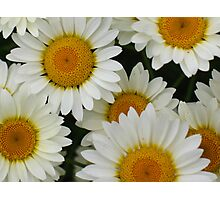 Happy Daisy  © Photographic Print
