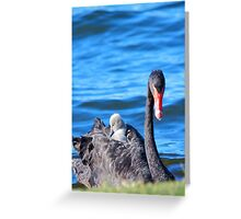 Black Swan - Western Australia  Greeting Card