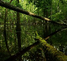 Swampy Reflections by Deb Campbell