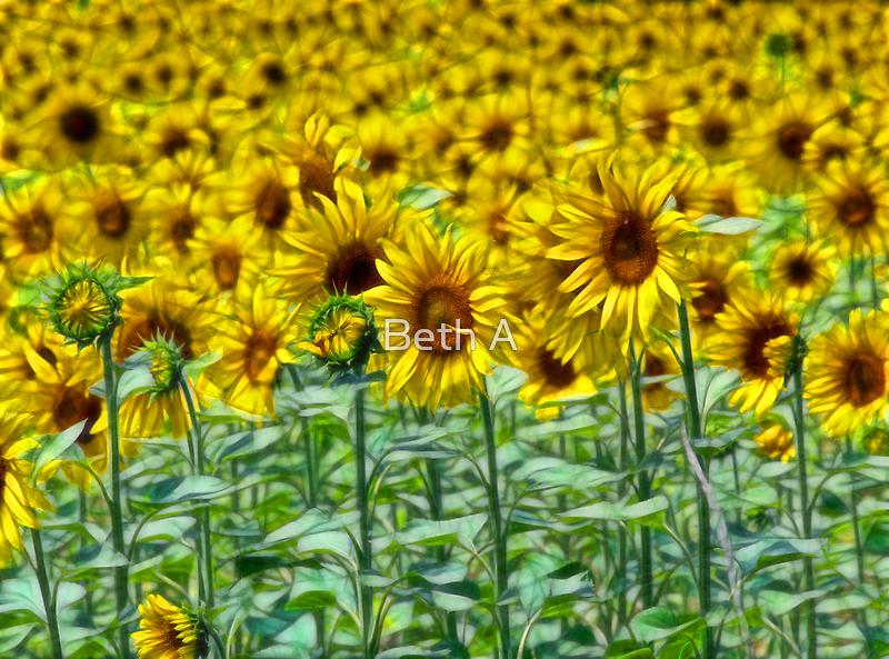Sunnyside Up by Beth A