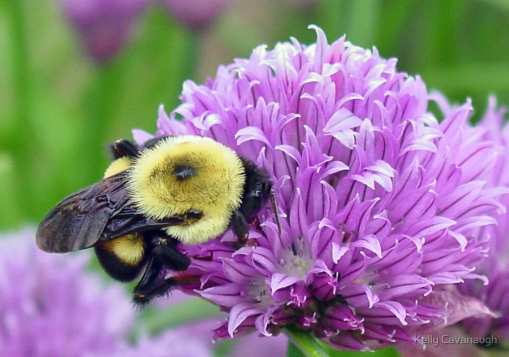 Thrivin' on Chives by Kelly Cavanaugh