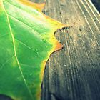Leaf by MRPhotography