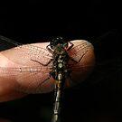 Dragonfly On My Finger by Len Bomba