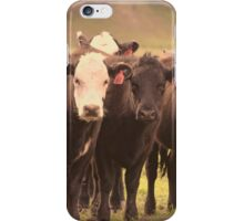 Curious Cows  iPhone Case/Skin