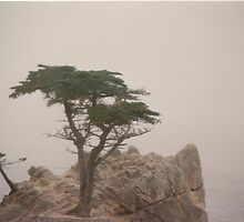 Lonesome Cypress by dbronco928