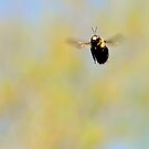 Hovering in mid air by Scott Mitchell
