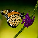 Bokehed Monarch by Phillip  Simmons