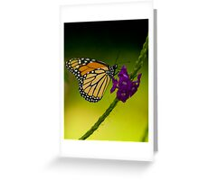 Bokehed Monarch Greeting Card