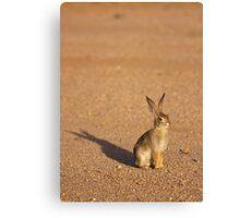 Cottontail Rabbit Canvas Print