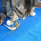 Young Male Tabby Cat Playing With It's Prey by taiche
