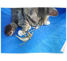Young Male Tabby Cat Playing With It's Prey Poster