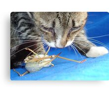 Close Up of A Tabby Cat and Katydid Canvas Print