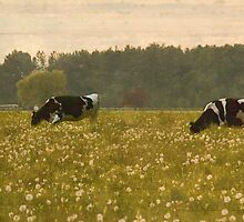 Happy Cows II by Appel
