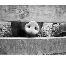 Snout in Black & White Photographic Print