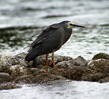 Heron By The River by Bryony Griffiths