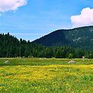 Hwy 36 Tehema County by NancyC