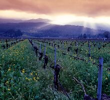 Spring Sunset Over Napa Valley by George Oze