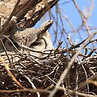 Great Horned Owl Nesting by Vickie Emms