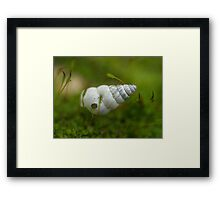 Floating On A Bed Of Moss Framed Print