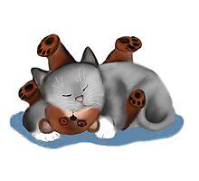 Teddy Bear Pillow for Gray Kitten Photographic Print