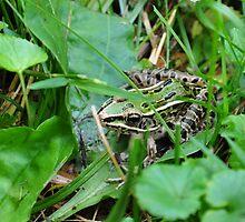 Hidden Frog by mltrue
