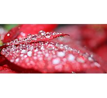 red bubbly Photographic Print
