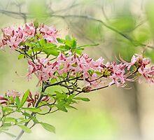 Wild Azalea Afternoon by MotherNature2