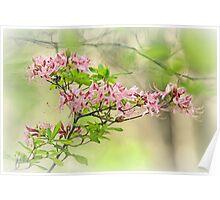 Wild Azalea Afternoon Poster