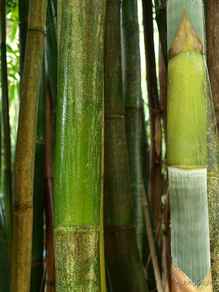 Bamboo  by Judy Gayle Waller