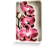 Orchids From Lynn Greeting Card