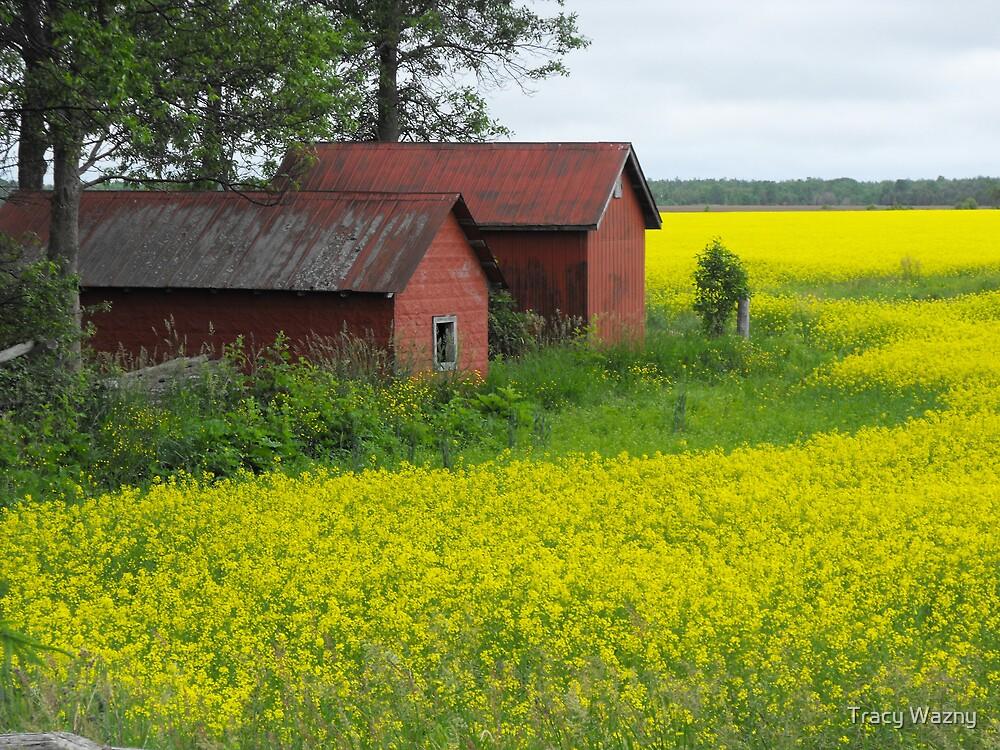 Red Sheds, Yellow Fields by Tracy Wazny