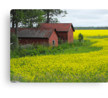 Red Sheds, Yellow Fields Canvas Print